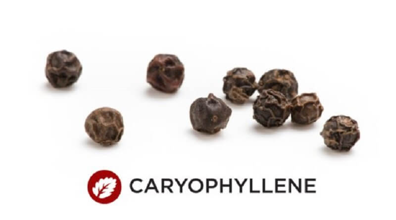 What is Caryophyllene